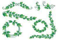 Lovely Ivy Vine Vectors