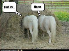 Horsehage!