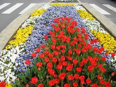 Color Burst Landscapes Pansy and Tulip Winter/Spring Design