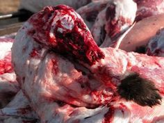 uggs skinned alive - Google Search