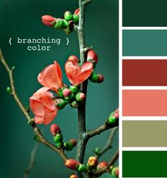 Design Seeds, for all who love color. Apple Yarns uses Design Seeds for color inspiration for knitting and crochet projects. Colour Pallette, Color Palate, Color Combos, Bedroom Colour Schemes Warm, Design Seeds, World Of Color, Color Swatches, Color Stories, Room Colors