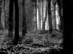 Ian Parry Photography: Runts wood