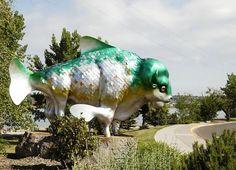Buffalo Fish Statue: In Great Falls, Montana.