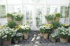 Beautiful white flowers in clay pots White Gardens, Small Gardens, Outdoor Gardens, Pot Plante, Moon Garden, Walled Garden, Container Flowers, Garden Planters, White Flowers