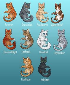 ideas funny pictures of cats gatos Warrior Cat Memes, Warrior Cats Fan Art, Warrior Cats Series, Warrior Cats Books, Warrior Cat Drawings, Warrior Cats Clans, Warrior Cats Funny, Funny Animal Memes, Funny Animals