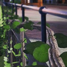 An awesome Virtual Reality pic! Adding vines to the city. #ue4 #unrealengine #virtualreality #vine #vines #videogame #indiedev #gamedev #plants #leaves #3dart #3d #plant #screenshot by timefirevr check us out: http://bit.ly/1KyLetq