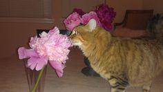 Aja loves peonies, I do too!