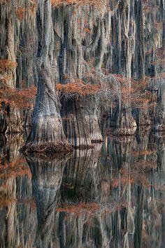 Fall Cypress, Reflection, Caddo - Louisiana photo by David Chauvin