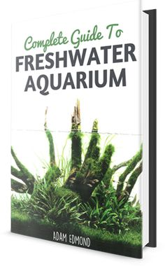 When setting up your aquarium, I'm sure you have a rough idea how you want it to be. You would have done some research on the different aquascaping style.