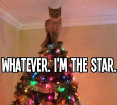 """Whatever. I'm the star."" --- Too funny! We all know that cats love attention, but this cat seems a little desperate. --- If you're looking for an adoptable animal in Colorado, stop by the Humane Society of Fremont County, located in Canon City. http://www.canoncityhumanesociety.org/"