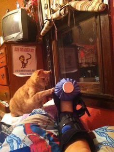 i said i'm fine, cat. just bring me some pudding. please.