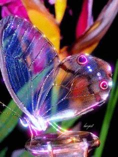 "SINGLE GIF: Butterfly . (""Gif Paradise."") NOTE: THIS IS THE ONLY GIF IN THE ""VISIT"" SECTION OF THIS PIN."