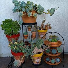 If all goes as planned I will be spending Saturday #thrifting with my crazy fun friend Judy @jujubeethrifting. The stands in this picture are from various thrift stores. If you're into thrifting and #diy projects you should follow Judy. She has a knack for turning old unwanted items into something new & beautiful.♥️♥️  #succulents