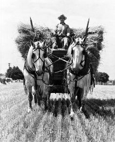 Black and white picture Farm Pictures, Old Pictures, Old Photos, Vintage Horse, Vintage Farm, Pretty Horses, Beautiful Horses, Photo Bretagne, Farm Photo