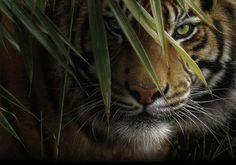 Hiding or waiting to pounce!! Beautiful beast