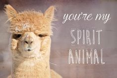 12 Best Alpaca Cards images | Cards, Greeting cards, Magical