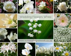 Wedding Flowers-White The purest of colours for your big day. Wedding Blog, Our Wedding, White Wedding Flowers, Big Day, Wedding Inspiration, Colours, Pure Products, Weddings, Plants