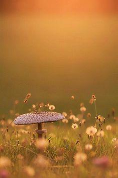 Abendstimmung V Evening V Author: Christian Froebel.just an example of how young children should b Wild Mushrooms, Stuffed Mushrooms, Foto Macro, Mushroom Fungi, Macro Photography, Beautiful World, Beautiful Pictures, Young Children, Garden Types