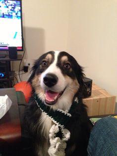 Doggiescarves@gmail.com