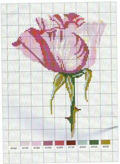 Gallery.ru / Фото #36 - Flower Variations - Mongia