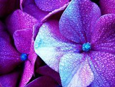 .. purple flowers ..