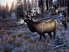 Wildlife Artist Cynthie Fisher Bull Elk Picture A Worthy Opponent Wildlife Paintings, Wildlife Art, Animal Paintings, Wild Life, Jackson Pollock, Elk Pictures, Elk Images, Hunting Art, Hunting Painting