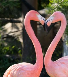 Flamingo Heart by Michael James Esquire on 500px