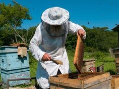Everything You Need to Know to Start Your Own Off-The-Grid Bee Hive