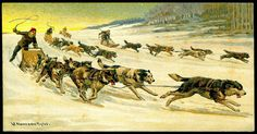 Cigarette Card - Canadian Dogsleigh Races by cigcardpix, via Flickr