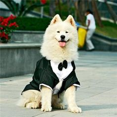Big large dog wedding Tuxedo garment clothes for bulldogs dog Formal Party Suit tie golden retriever big dog coat jacket costume-in Dog Coats & Jackets Cheap Dog Clothes, Large Dog Clothes, Big Dogs, Large Dogs, Worlds Biggest Dog, Dog Wedding Outfits, Wedding Attire, Dog Tuxedo, Tuxedo Suit
