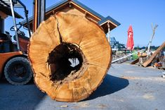 An almost perfect hole. It may be round, but moving the long log around is only possible with the forklift. Oak Logs, Natural Soul, Tree Trunks, Almost Perfect, Chainsaw, Rough Cut, Wood Species, Bean Bag Chair, Woodworking