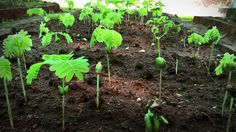 Grow a Self-Sustainable Food Forest in Your Backyard in Just 10 Years Canadian Forest, American Chestnut, Jungle Gardens, Reserva Natural, Plantar, Back To Nature, Nature Reserve, Horticulture, Natural World