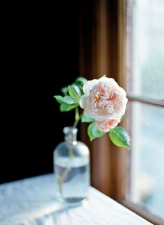 David Austin Rose | Evelyn | Cindy Loughridge Photography