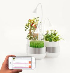 Smartphone-controlled microfarming system can grow veggies in tiny spaces
