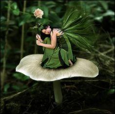 ... Fairies and elves ...: Pixies!!!