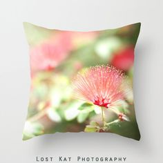 Paintbrush Flower Photo Pillow Modern by lostkatphotography