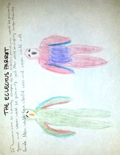 If humans were as sexually dimorphic as the Eclectus Parrot Female Of The Species, Pictures To Draw, Parrot, Watercolor Tattoo, Exercise, Painting, Animals, Coloring, Parrot Bird