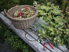 Wir binden einen Herbstkranz: Das benötigen Sie für Ihren Herbstkranz - Wohnen & Garten