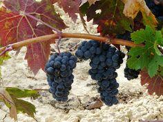 Rioja Alavesa (España)