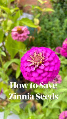 Cut Flower Garden, Beautiful Flowers Garden, Flower Farm, Flowers For Cutting Garden, Beautiful Gardens, Garden Seeds, Planting Seeds, Garden Plants, Orchids Garden