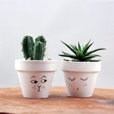 Luxury Small Cactus Ideas For Home Decoration. Here are the Small Cactus Ideas For Home Decoration. This post about Small Cactus Ideas For Home Decoration was posted Small Cactus, Cactus Flower, Flower Pots, Fake Cactus, Flower Bookey, Flower Film, Cactus Cat, Potted Flowers, Cactus House Plants