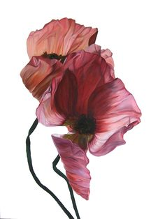Art Pharmacy is a carefully curated online gallery where you can buy affordable art by Australian emerging artists. Flower Petals, Flower Art, Photography Projects, Nature Photography, Rose Flower Wallpaper, Graphic Wallpaper, Art Courses, Beautiful Flowers, Watercolor Paintings