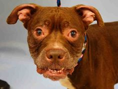 My name is Bernie, I am 7 years old. I have had a mass on my neck for a while now. My owner didn't want to spend the money to have it worked up. So here I am waiting for a rescue to help me. SAFE