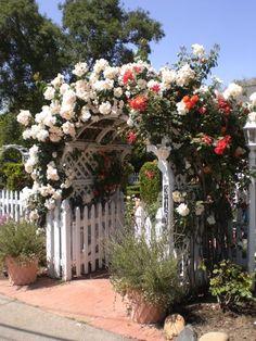 1st Annual Los Rios Historic District Garden Tour, San Juan Capistrano - Photo Credit - Lisa Delane