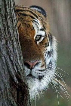 I'm watching u..