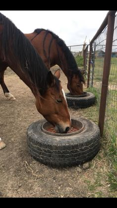 Dakota needs this just because he kicks his bowls over 🤪 Ground feed for horses to help prevent choke Horse Feeder, Hay Feeder, Horse Tack Rooms, Horse Barn Plans, Horse Shelter, Gado, Horse Stalls, Horse Farms, Beautiful Horses