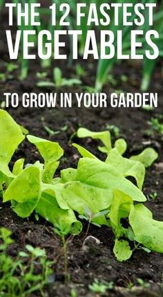 12 Fastest Vegetables to Grow in your Garden - Alternative Energy and Gardning