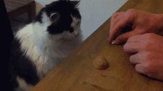 This cat has a gambling problem