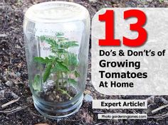 tomatoes-dos-donts