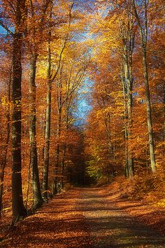 Autumn path (Brandenburg, Germany) by Dietrich Bojko Photographie Fall Pictures, Pretty Pictures, Beautiful World, Beautiful Places, Autumn Scenes, Seasons Of The Year, Belle Photo, Beautiful Landscapes, Nature Photography